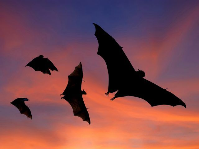 A group of bats flying through a sky.