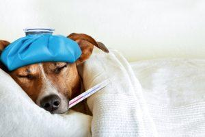 Can Your Dog Get the Flu? The Symptoms You Need to Look For