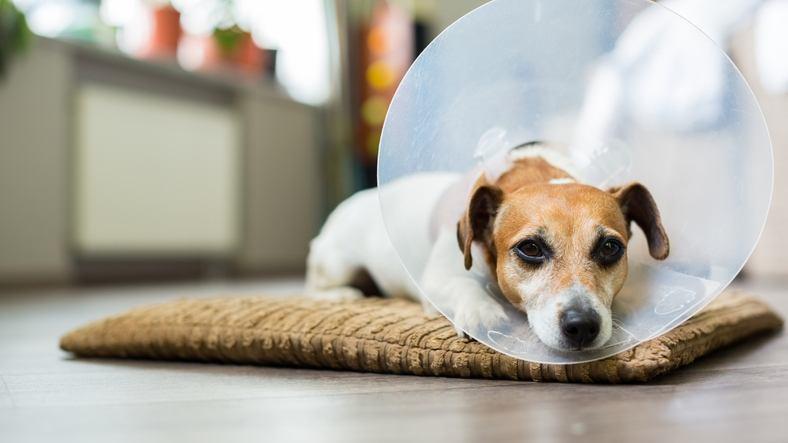 sick dog wearing plastic collar