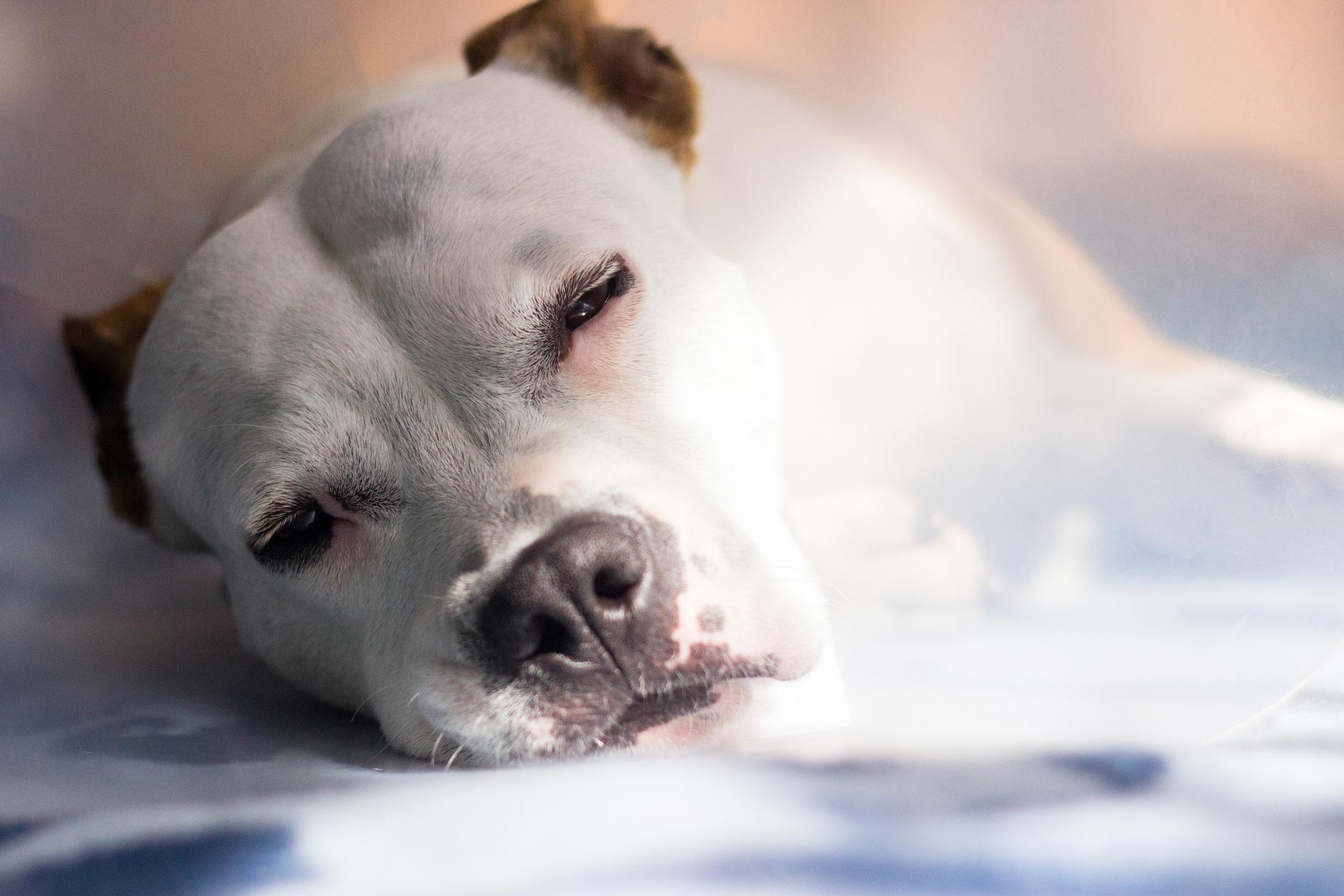 sick dog lying down