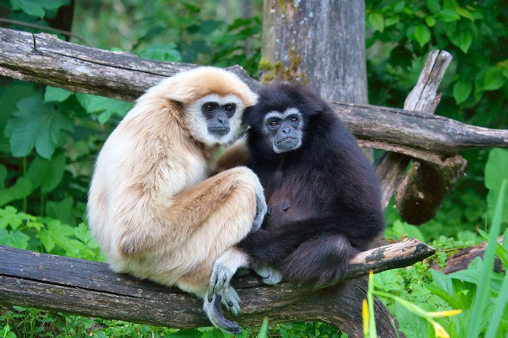 Lar Gibbons couple