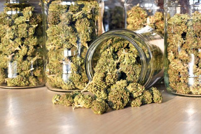 Dry and trimmed cannabis in jars.