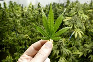 How Marijuana's Side Effects Compare to Alcohol (Plus, Which Is Really Worse)?