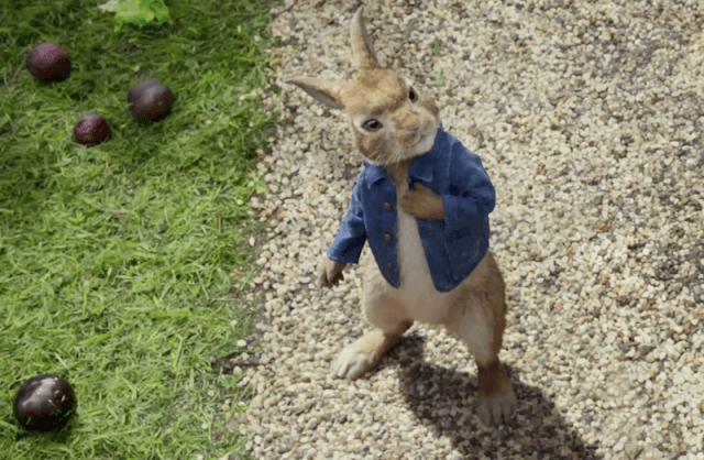 Peter Rabbit stands in the garden.