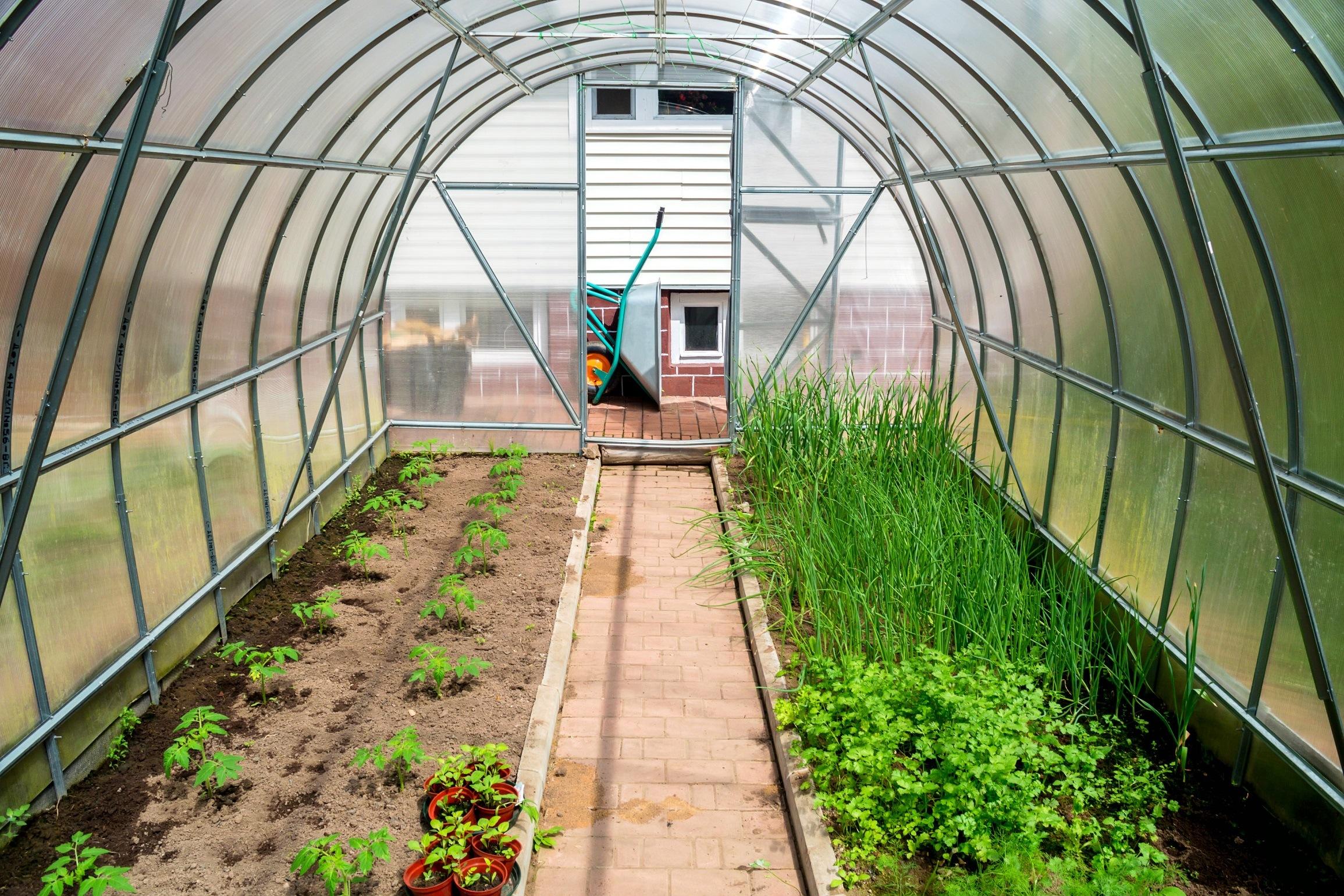 Inside small garden greenhouse