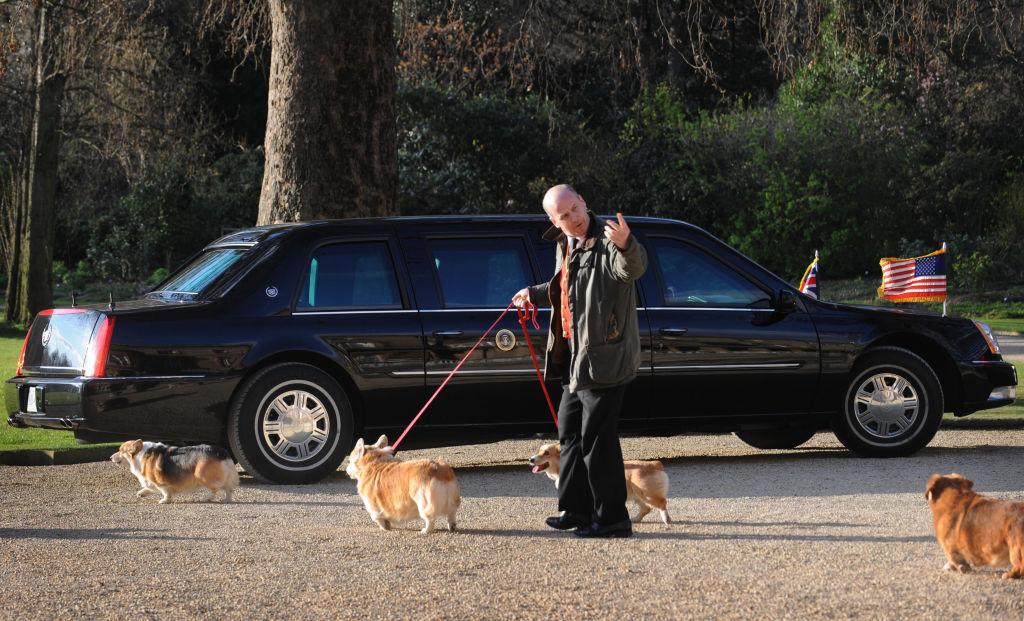 The queen's royal corgis go for a walk