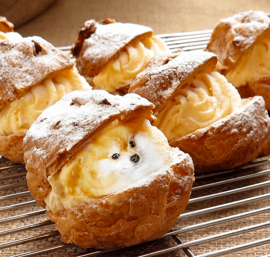 dog cream puff