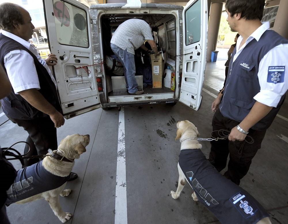 Sniffer dogs of the Argentine customs trained to search for hidden drugs and US dollars