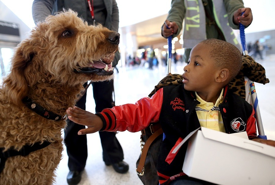 young boy pets a therapy dog