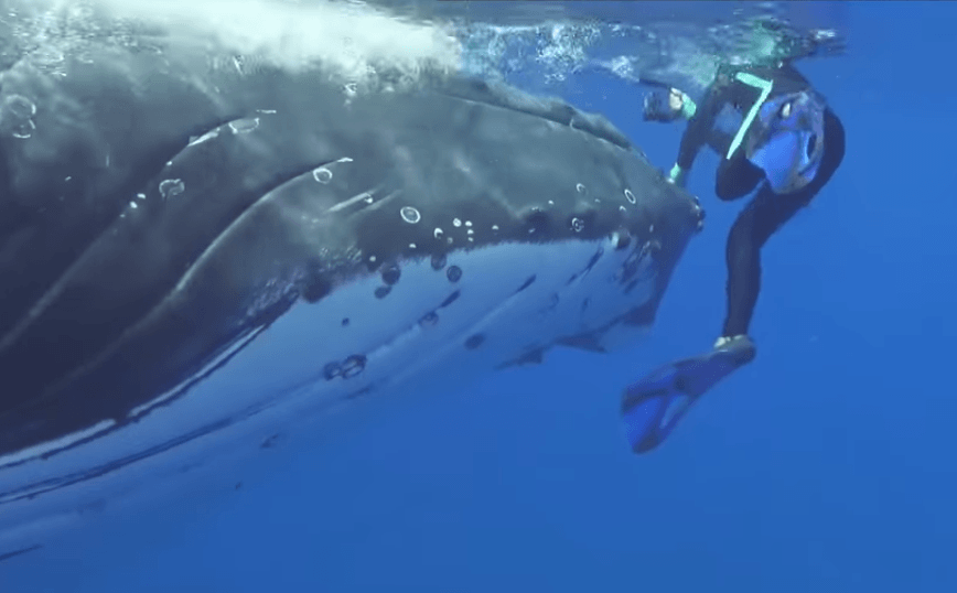 Whale rescues woman from shark