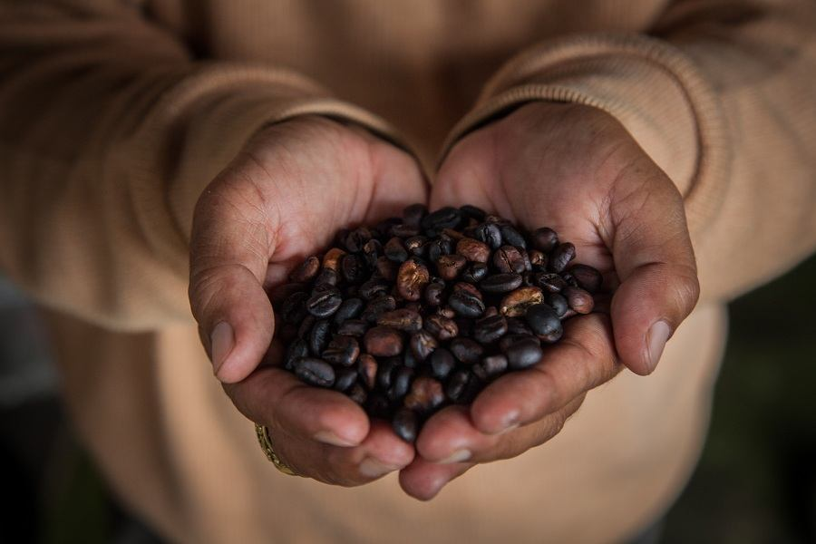 A person holding coffee beans.