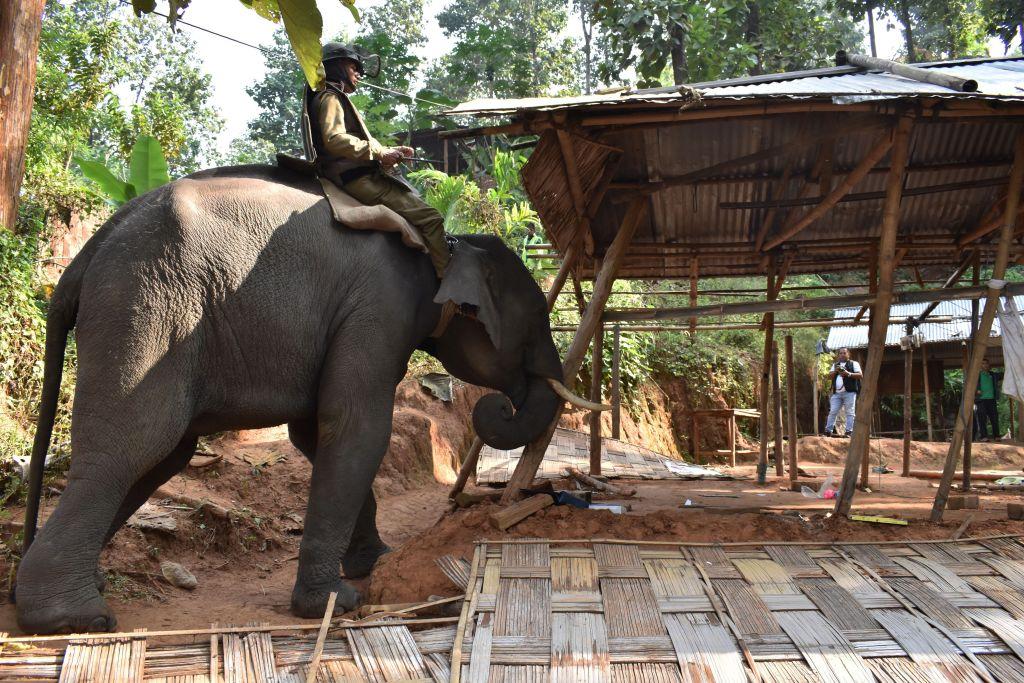 elephant to demolish illegal constructions