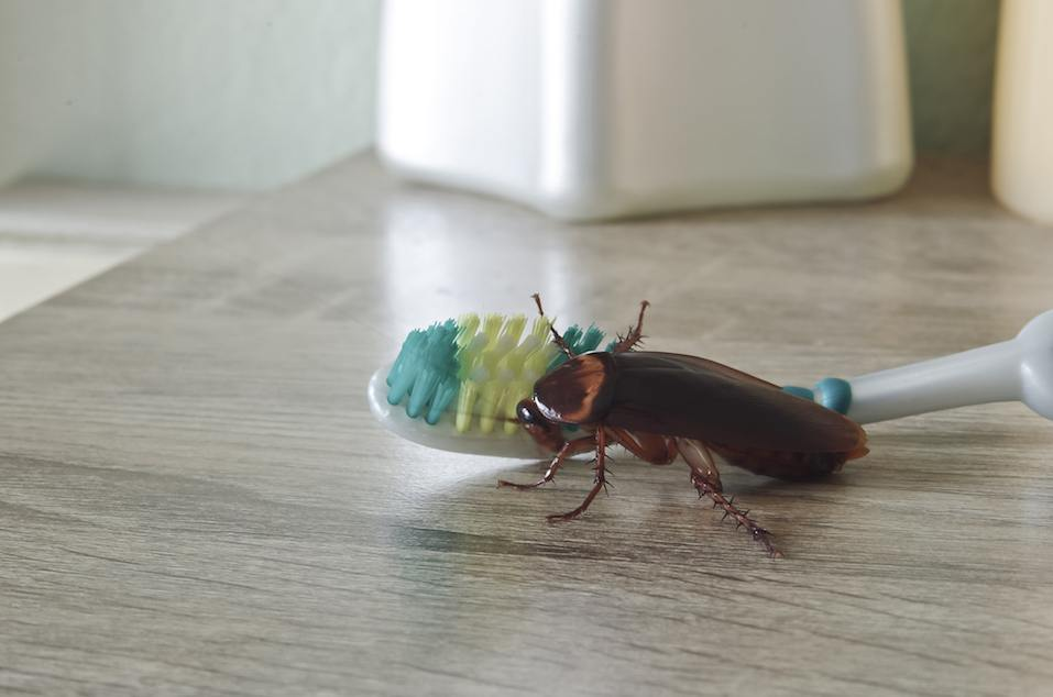 germs from cockroach