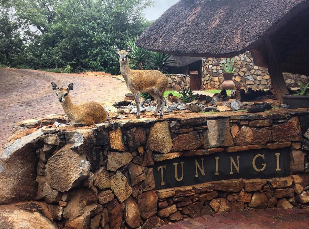 Tuningi Safari Lodge at the Madikwe Game Reserve in South Africa