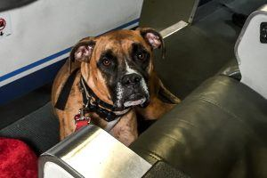 Flying With Your Pet? These Are the Most Dangerous Airlines for Animals