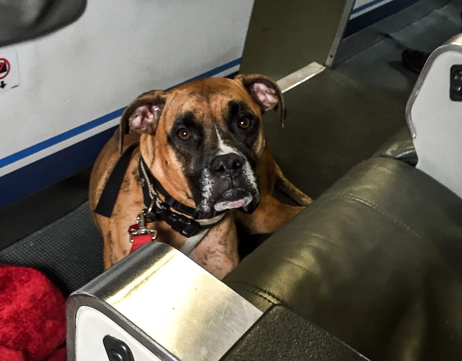 dog sits on the floor in an airplane