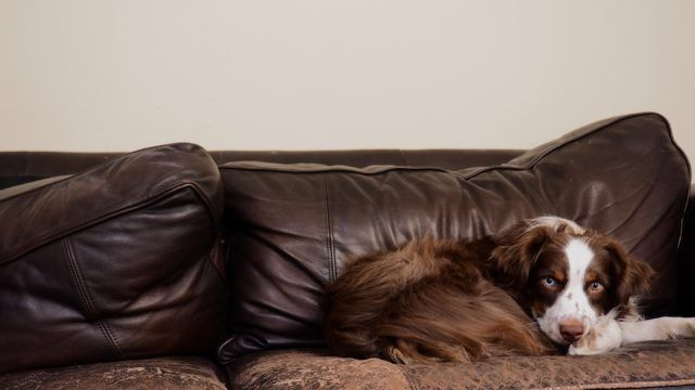 These Are The Best And Worst Couch Fabrics For Pet Owners