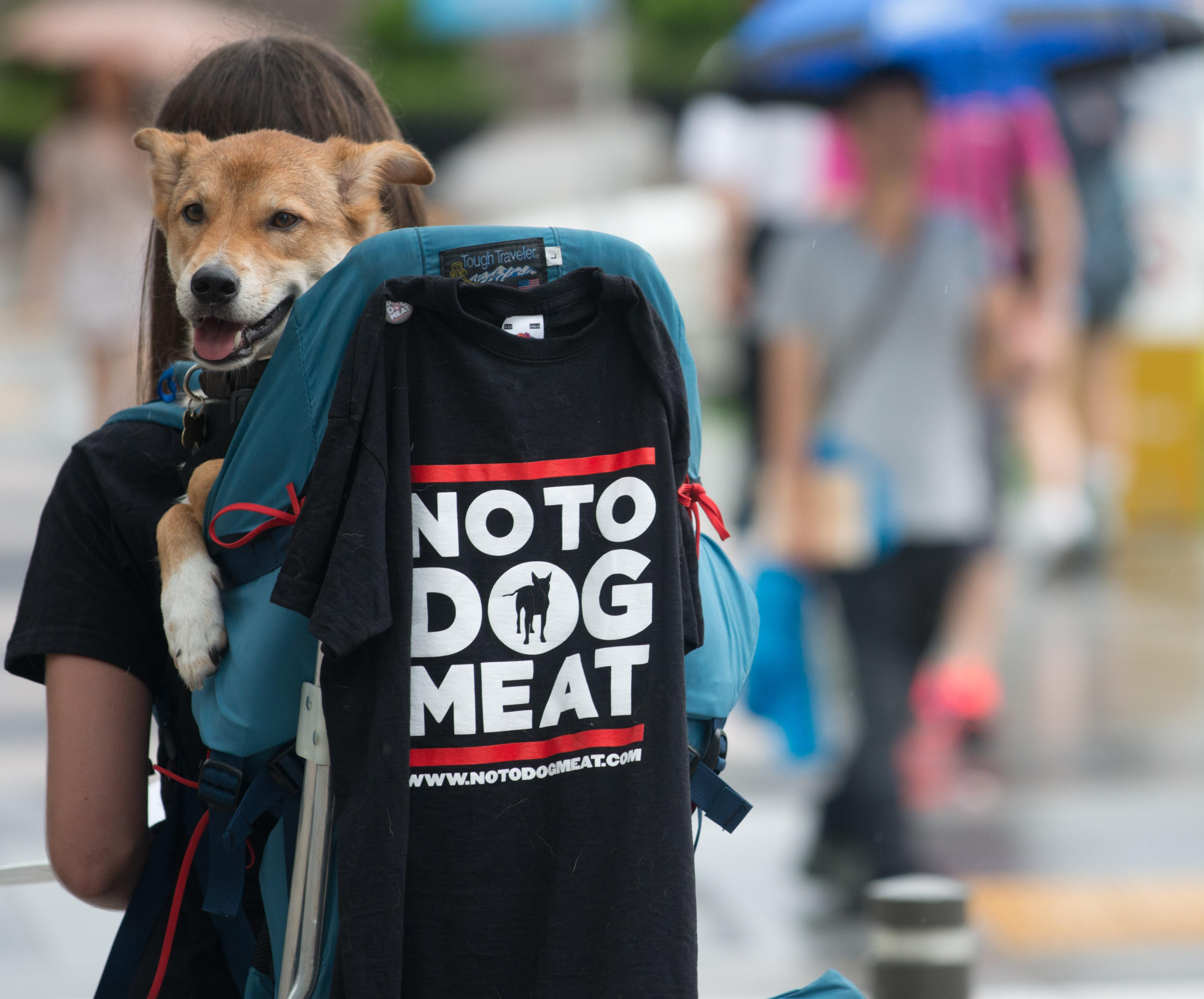 A protester carrying a dog displays a t-shirt condeming the eating of dog meat