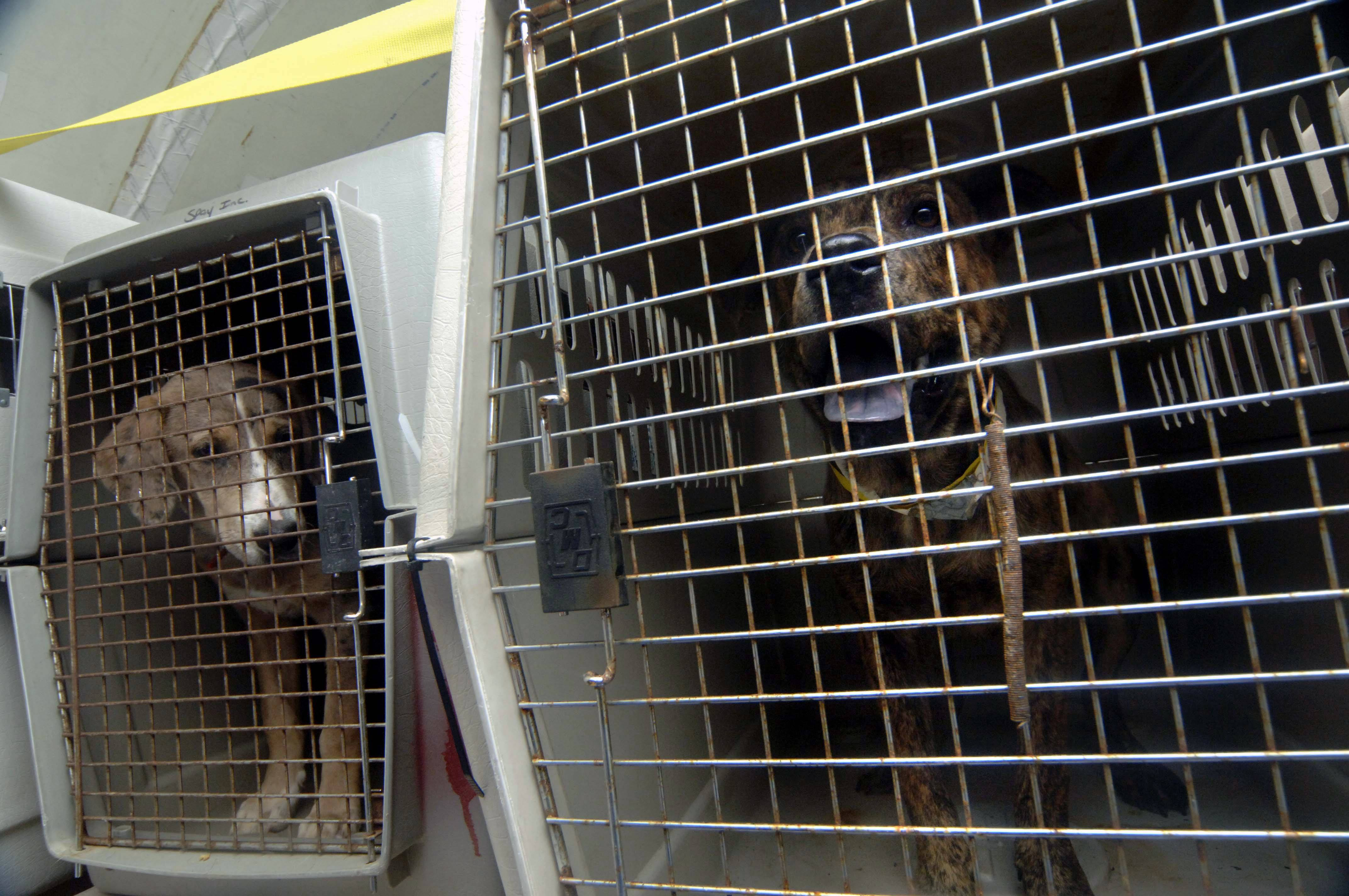 Animals in cargo of a plane