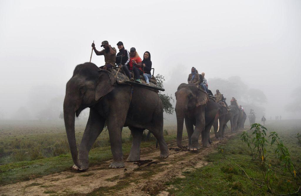 Tourists riding on the back of elephants