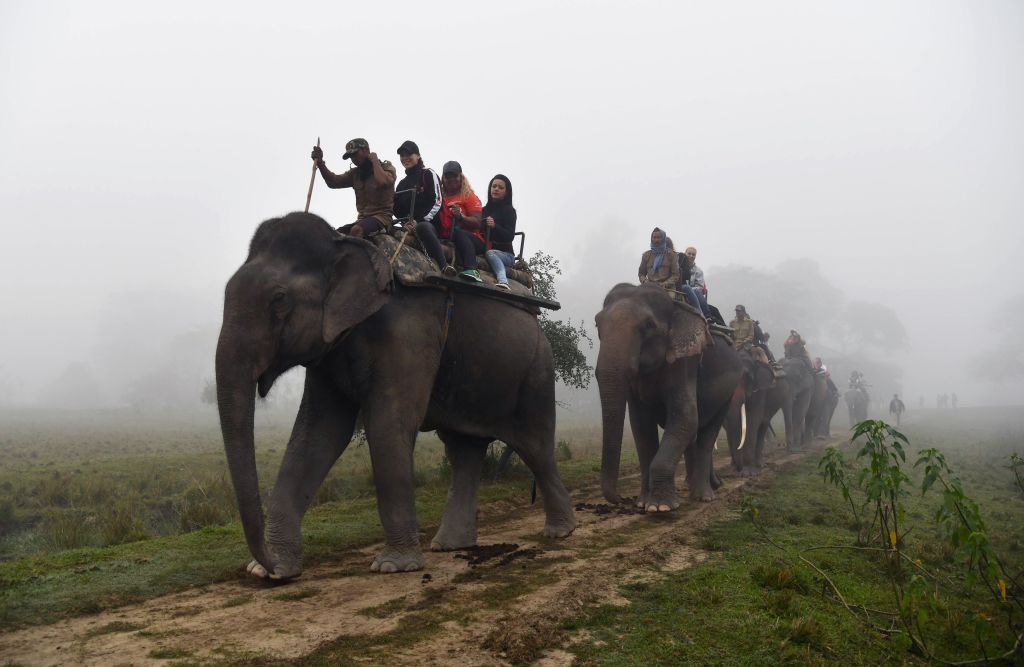 Tourists riding on the back of elephants