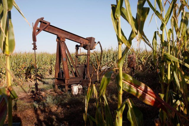 An oil well sits in the middle of a corn field
