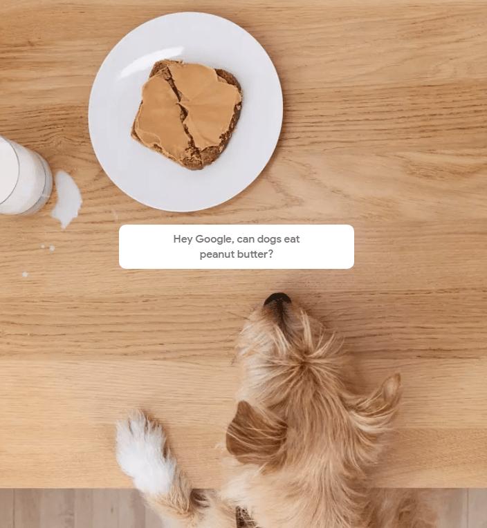Google home pets