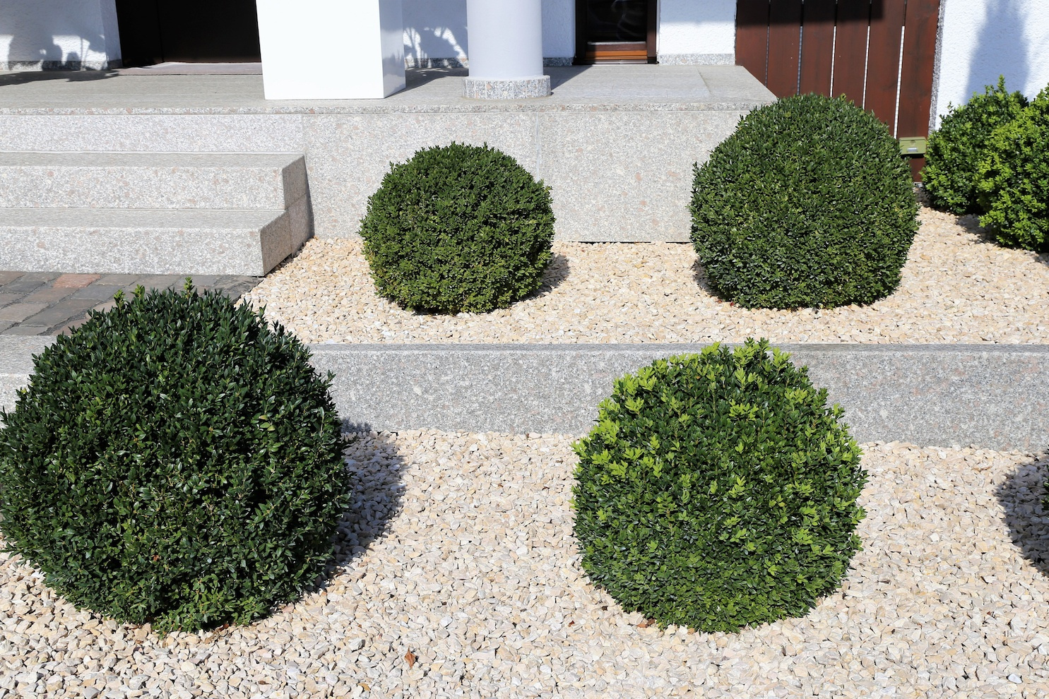 Front garden with decorative gravel and boxwood balls
