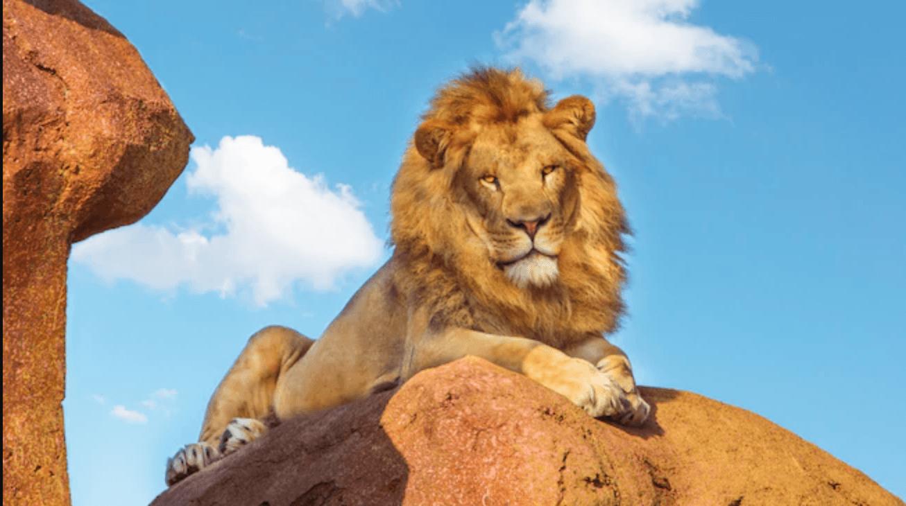 Lion disney