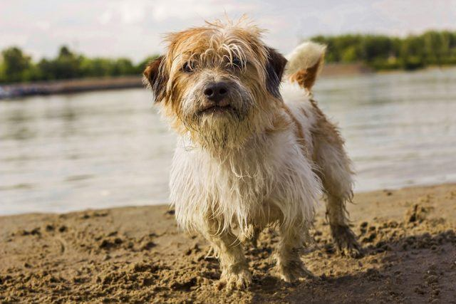 Little dog playing on the beach mud