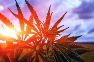 After Legalizing Marijuana, This State Had to Deal With the Consequences