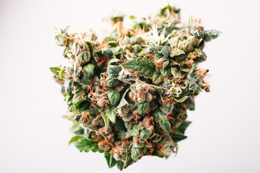 Medical drug cannabis bud with THC crystals