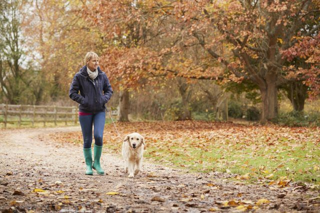 Woman walk With Labrador in forest