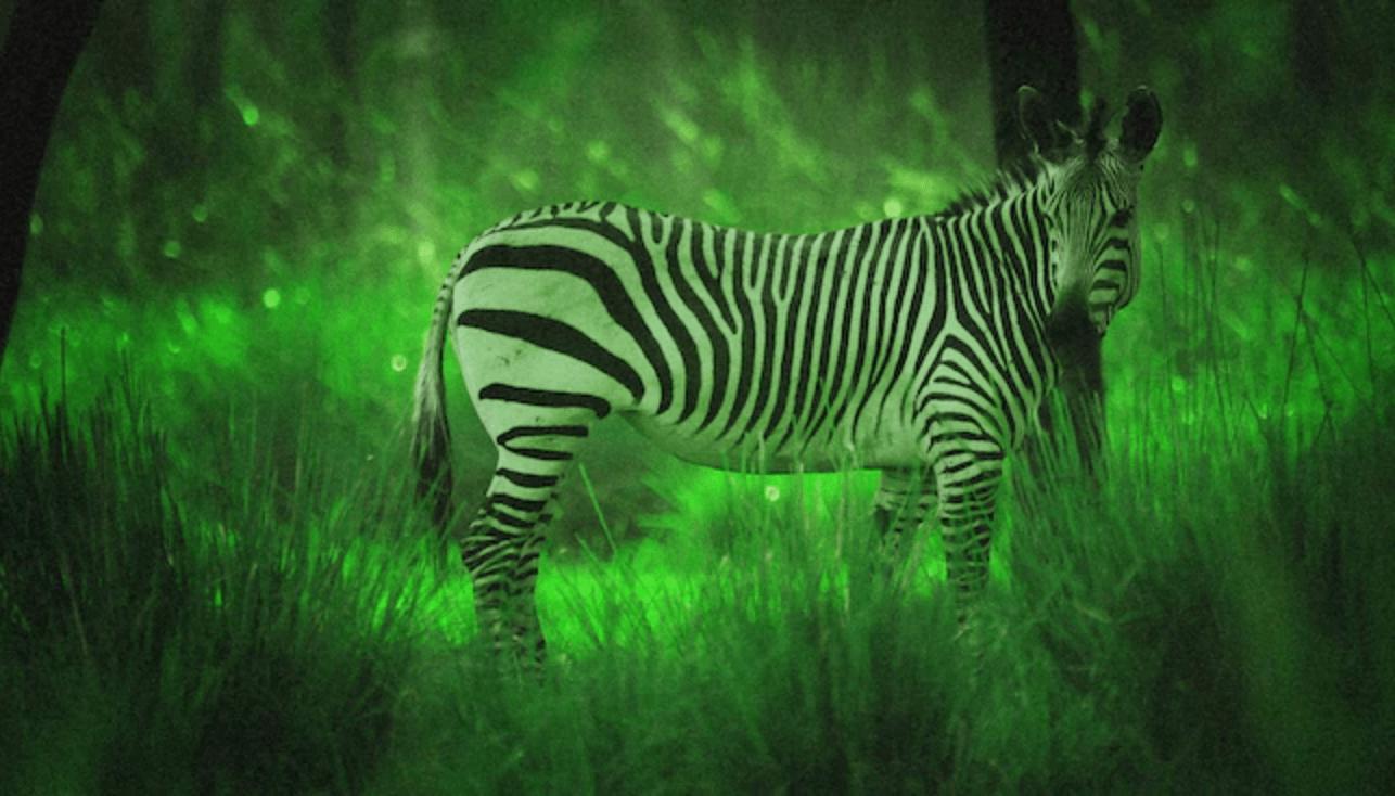 Night safari disney