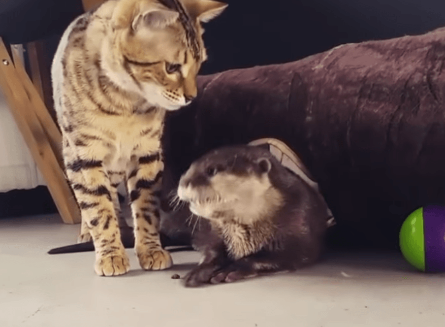 Otter and cat