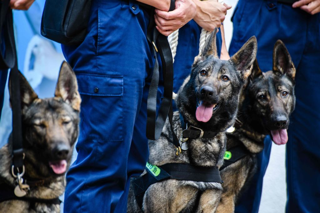 Group of K9 police dogs in training