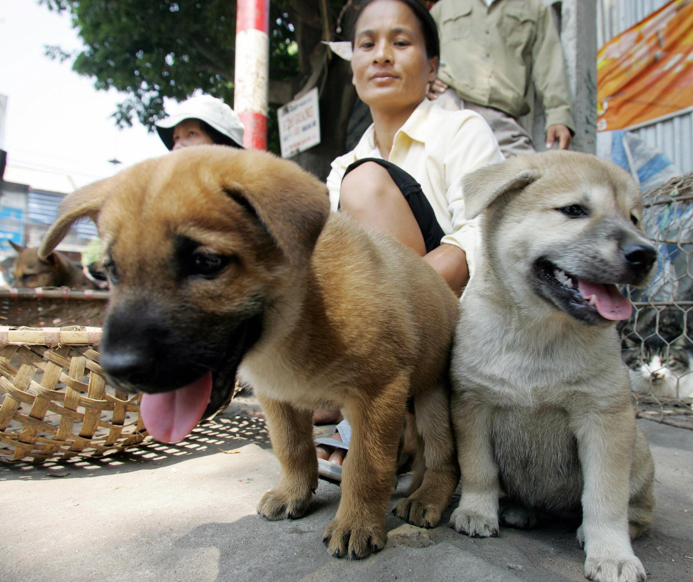 Two women sit selling young dogs at a road side