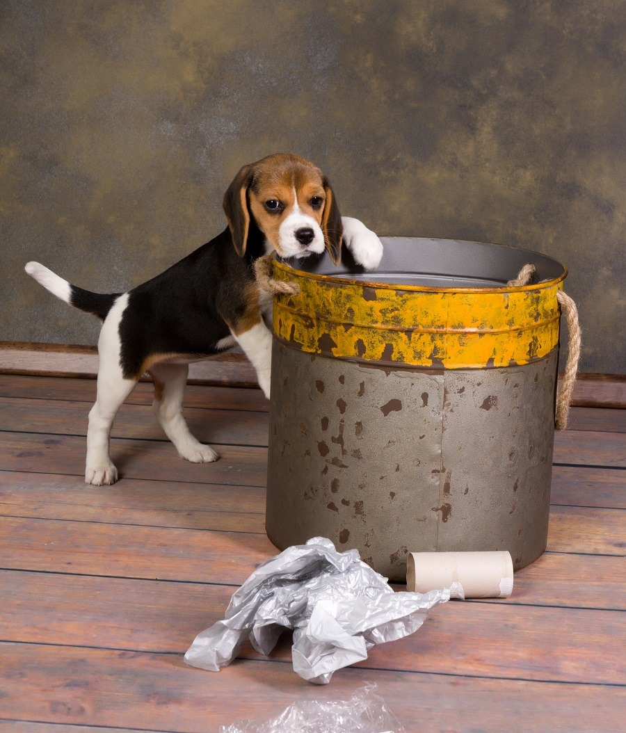 puppy exploring a garbage can