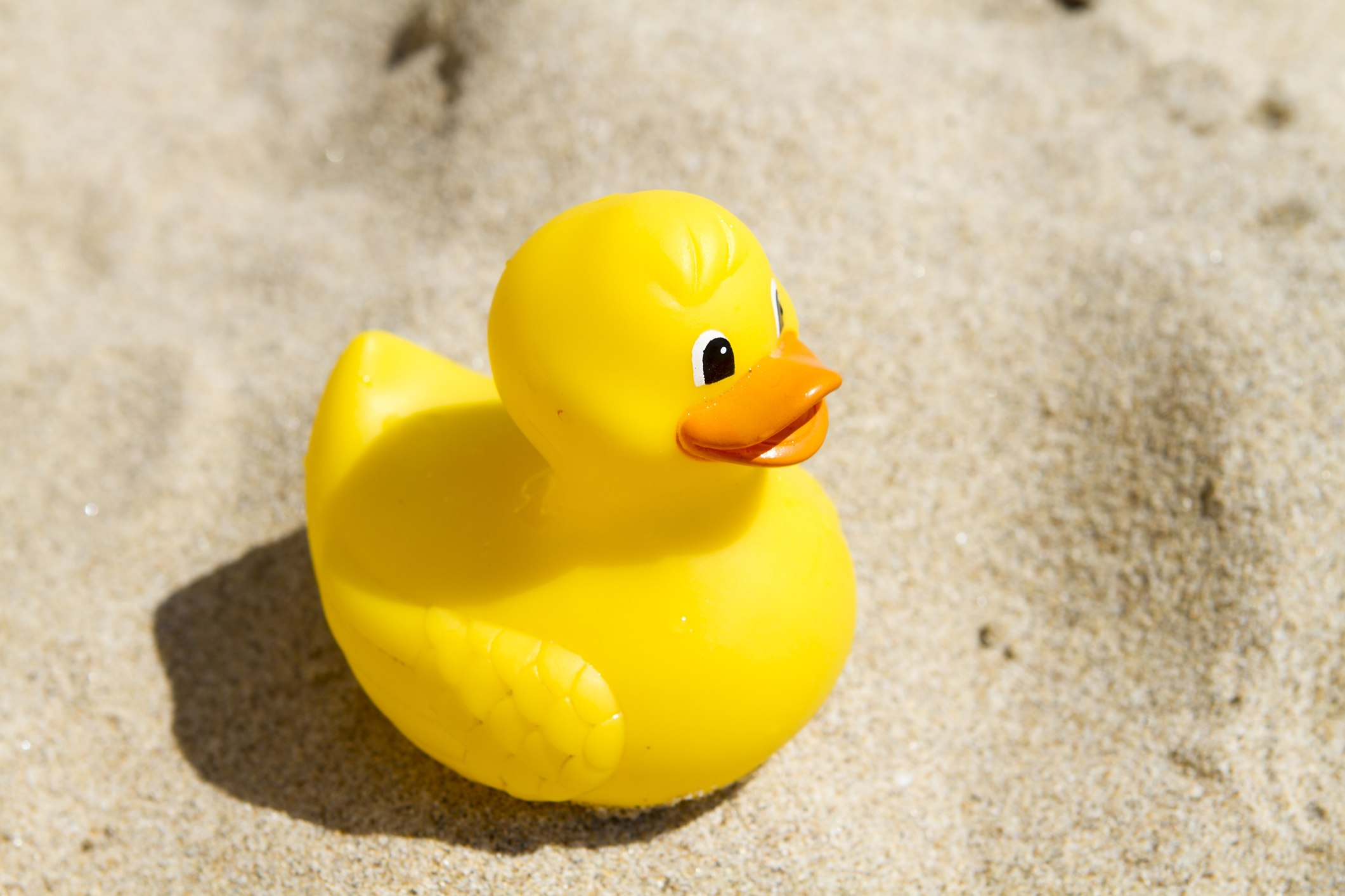 Yellow plastic toy duck in the sand