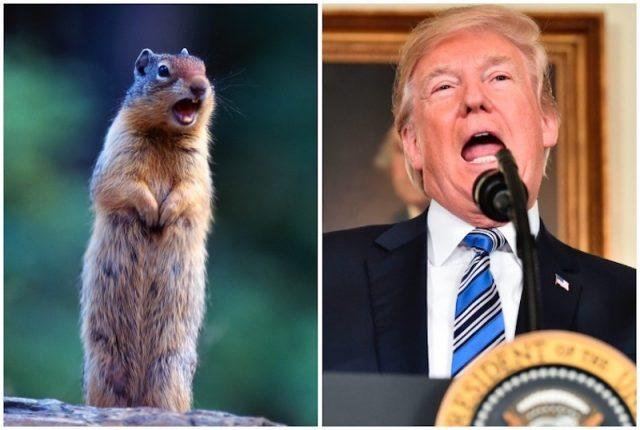 Donald Trump and gopher collage.