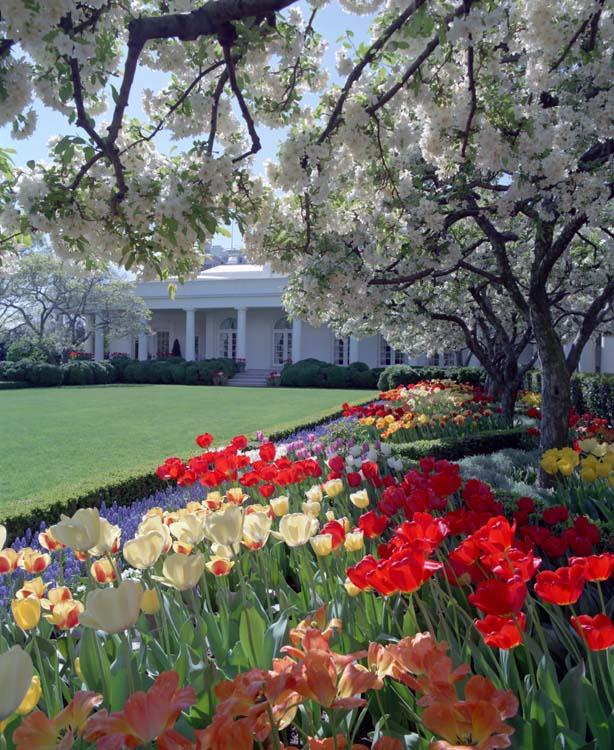White House Rose Garden