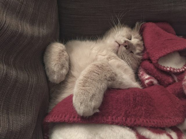 A cute cat sleeping in a bed