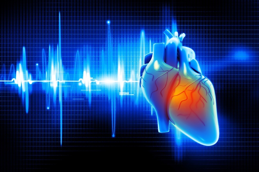 Digital illustration of Human heart