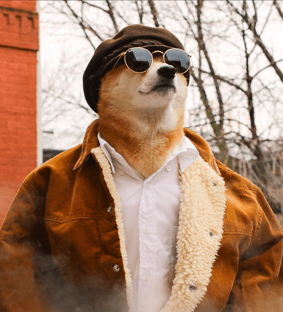dog in coat and sunglasses