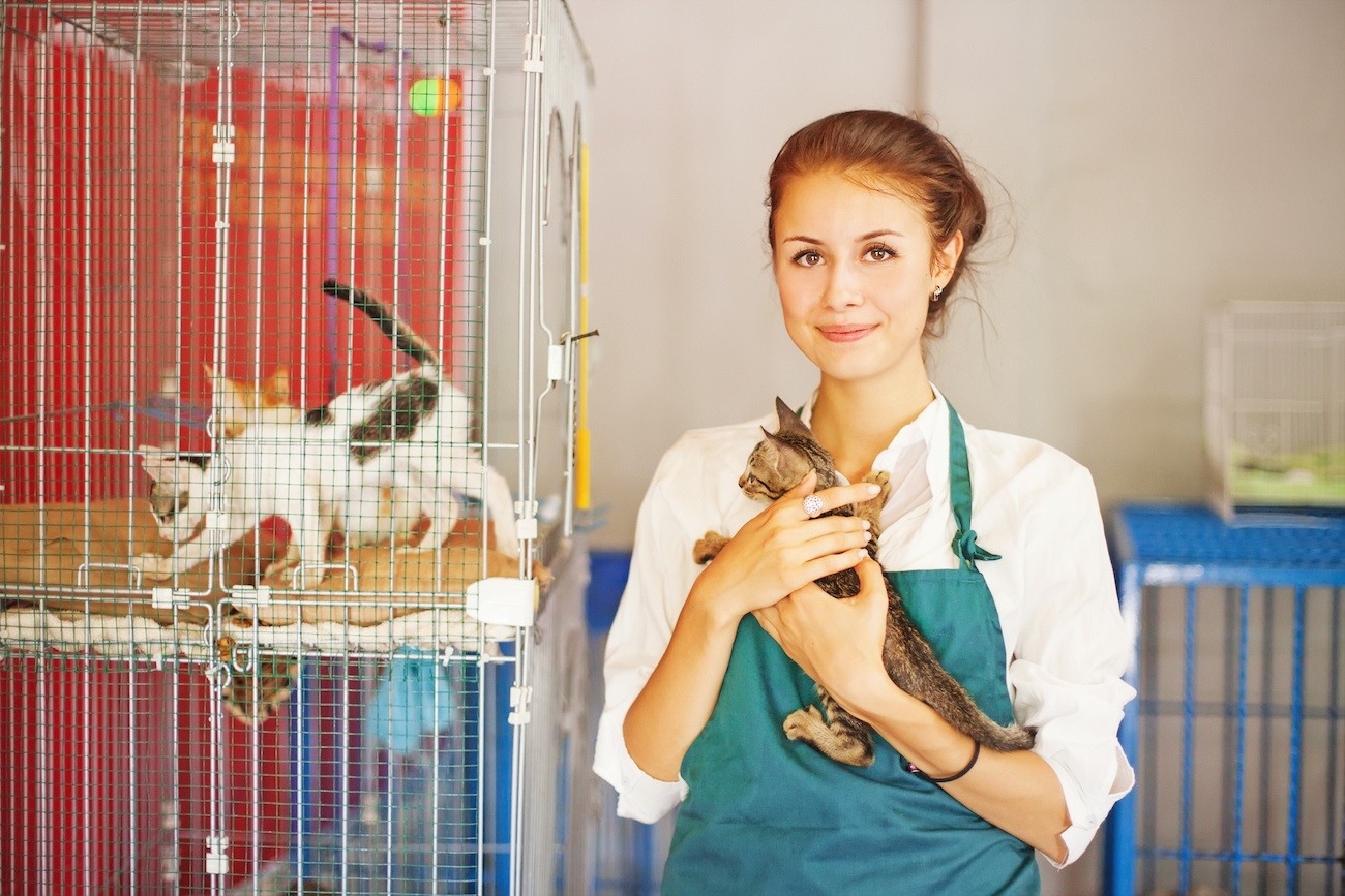 Volunteer with Cats at an animal shelter