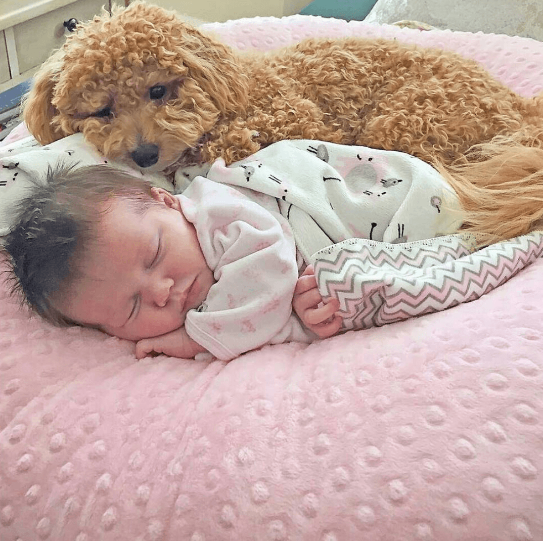 Baby and dog cuddling