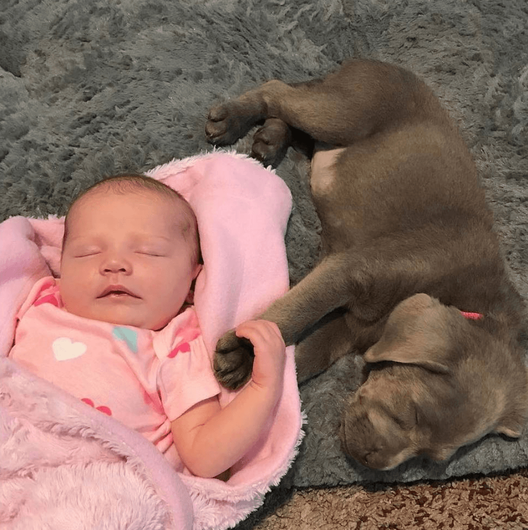 Baby and dog holding hands