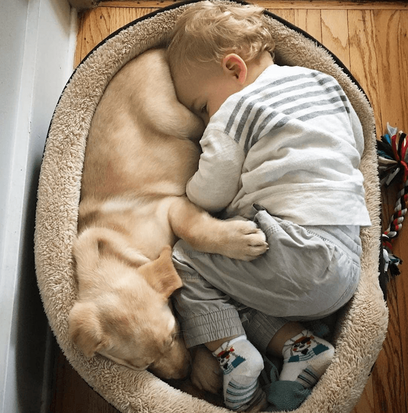 Baby and dog sleeping bed