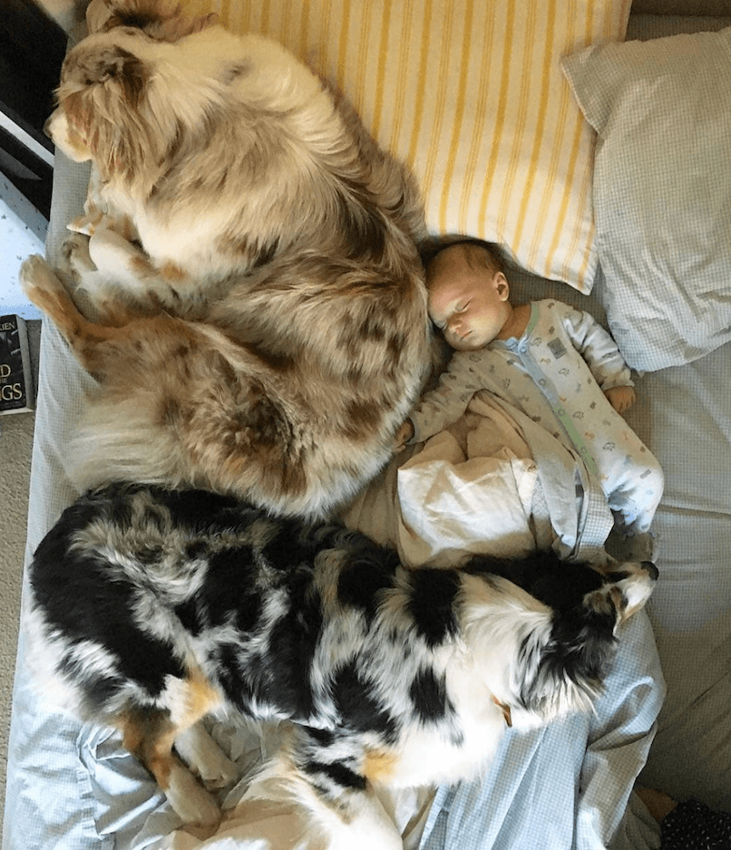 Baby and dogs sleeping