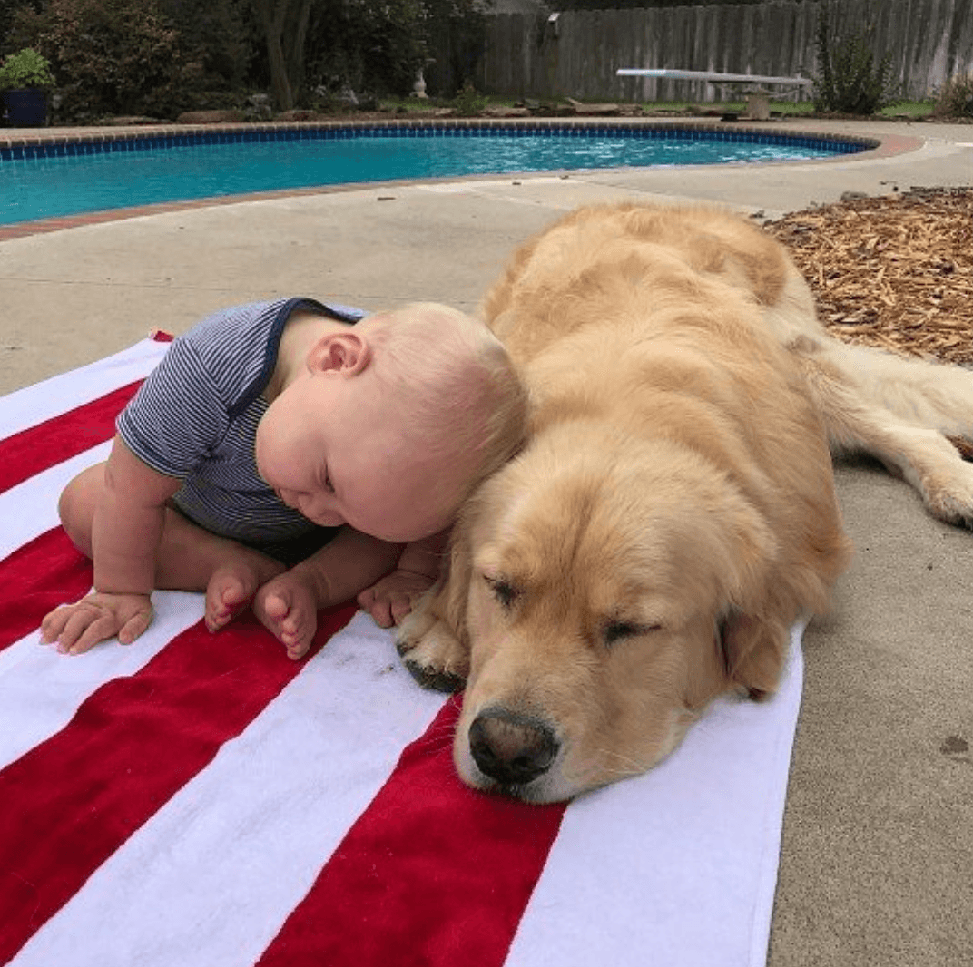 Baby sleeping on dog by a pool